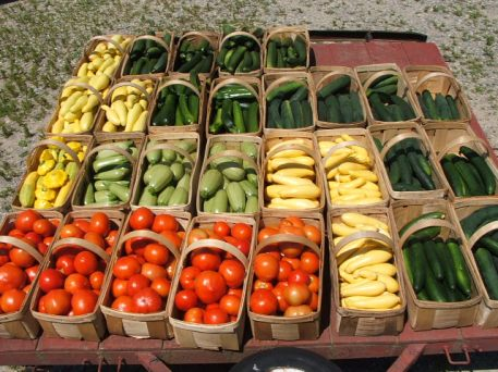 Everyone waits for our tomatoes, cukes and summer squash, zucchini, and patty pan at the height of the Summer season.  Try cousa (light green) on the grill.